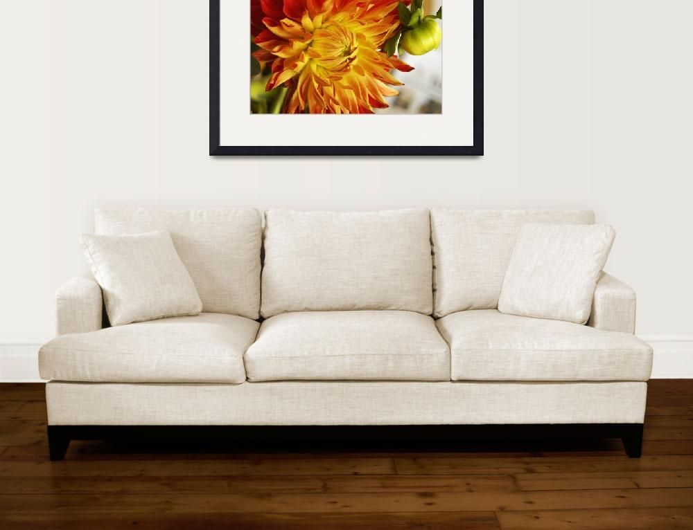 """""""Close Up of Red and Yellow Dahlia&quot  (2005) by AmbientCreations"""