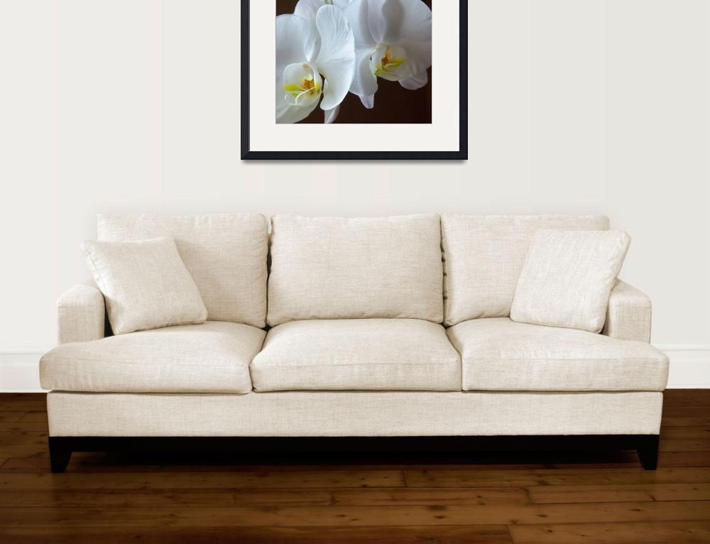"""""""Dancing Orchids&quot  (2007) by lightcaptured"""