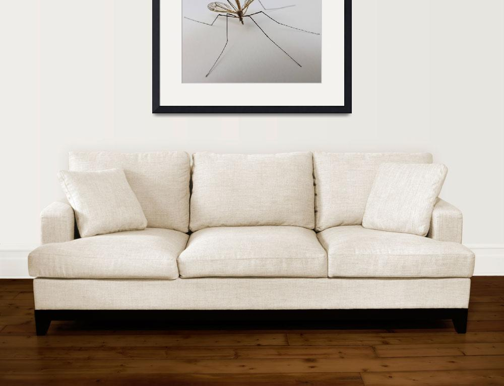 """""""insect shot&quot  by gallerymay"""