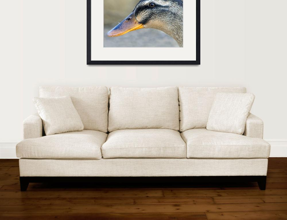 """""""Duck Profile&quot  by eyalna"""