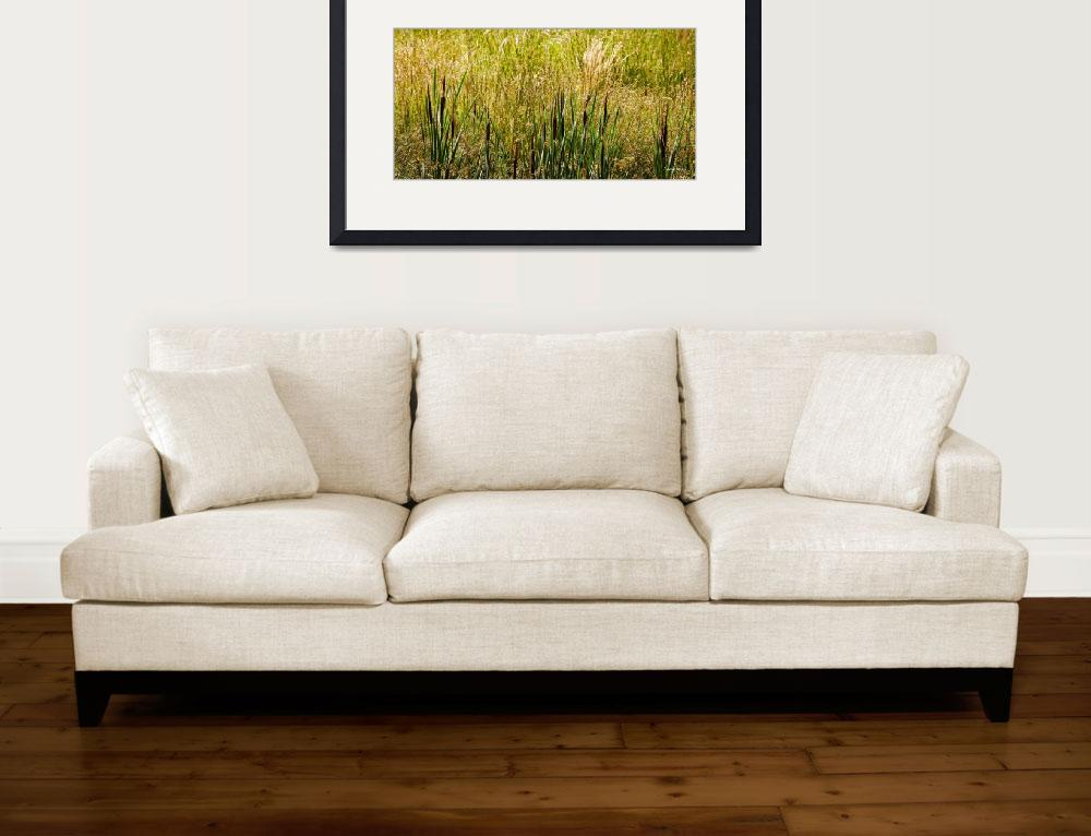 """""""cattails&quot  (2013) by LouiseReeves"""