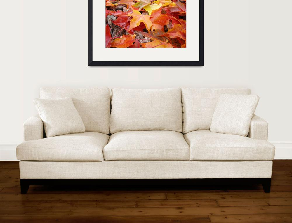 """""""Autumn Leaves Fall Trees art prints Red Orange Yel&quot  (2013) by BasleeTroutman"""