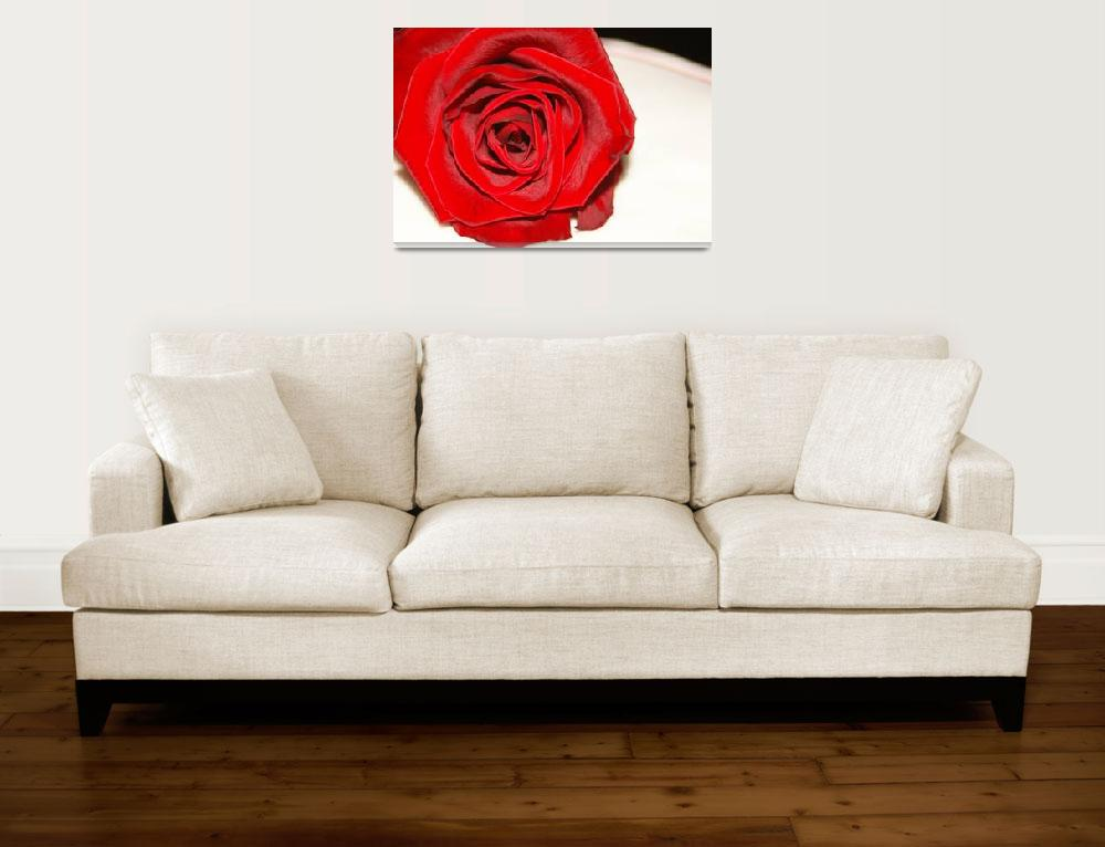 """Rose on Linen&quot  (2008) by ritzema"