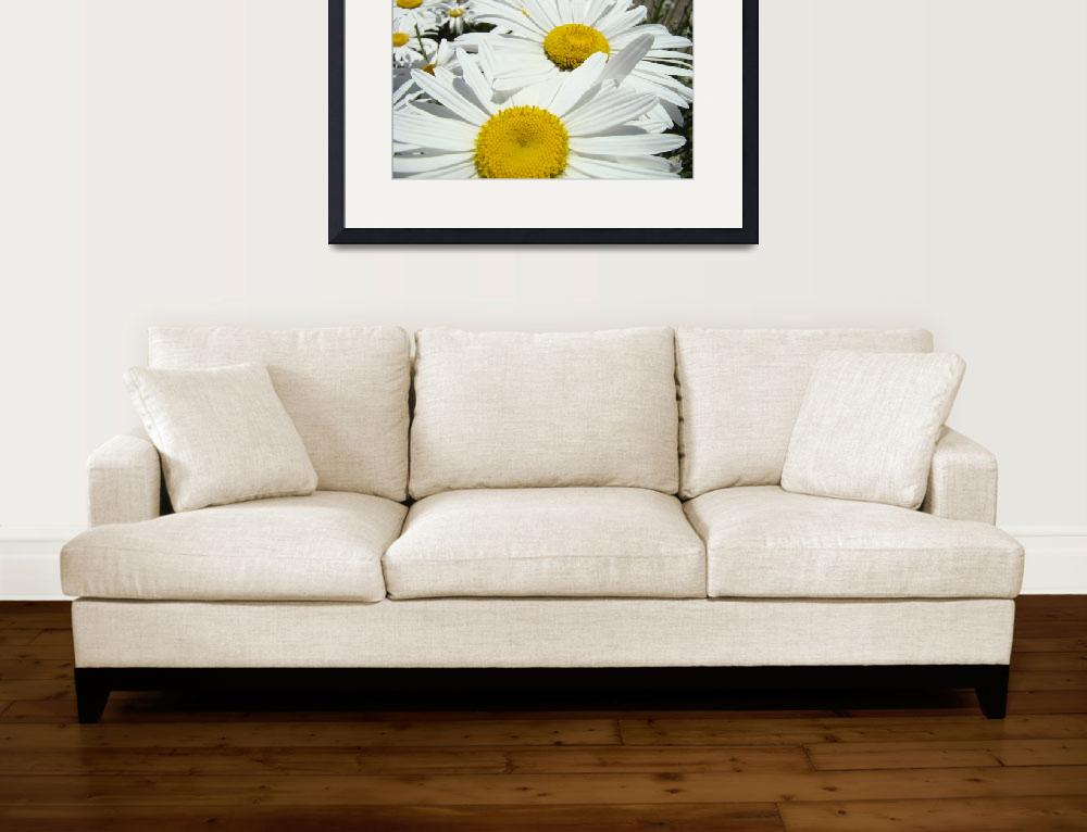 """Daisies Floral Art Prints White Daisy Flowers&quot  (2012) by BasleeTroutman"