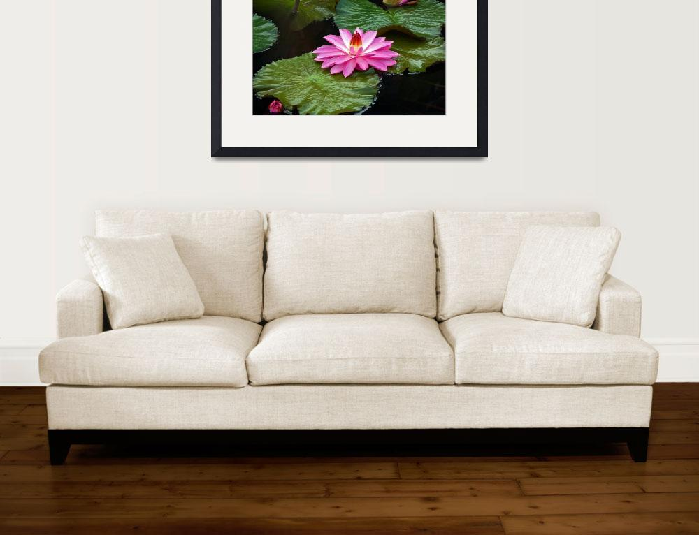 """""""Hot Pink And Green Tropical Waterlilies&quot  (2013) by LightHeart"""