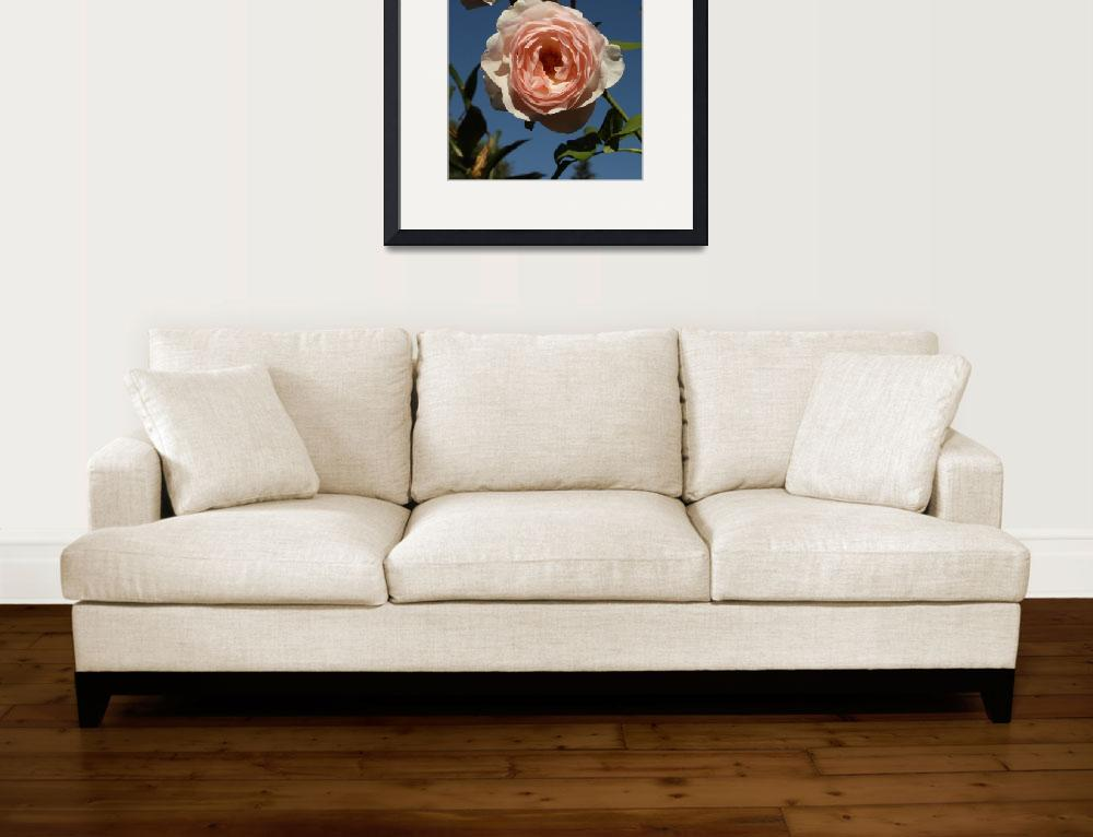 """""""Rose Cluster, Sky, Sarah Myers&quot  (2013) by smyers"""