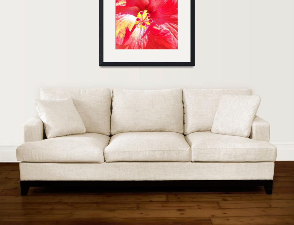 """""""Love of Hibiscus&quot  (2011) by ChrisAndruskiewicz"""