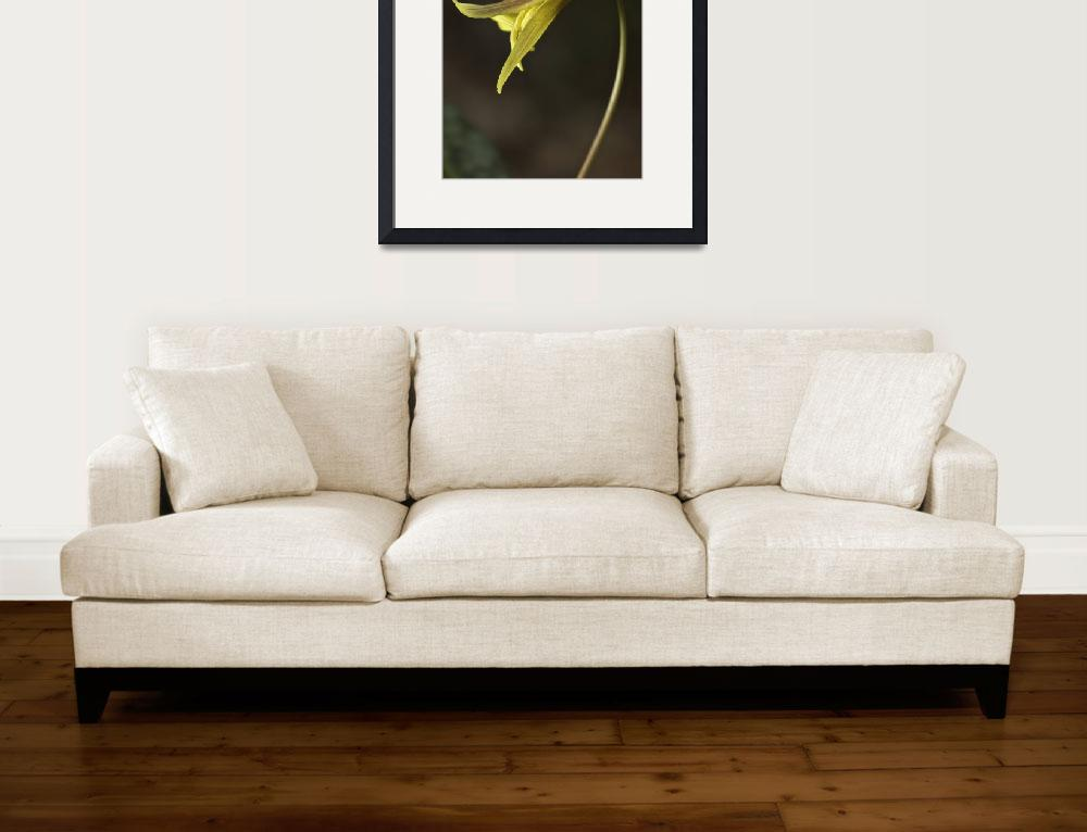 """""""Trout Lilly&quot  by jimcrotty"""