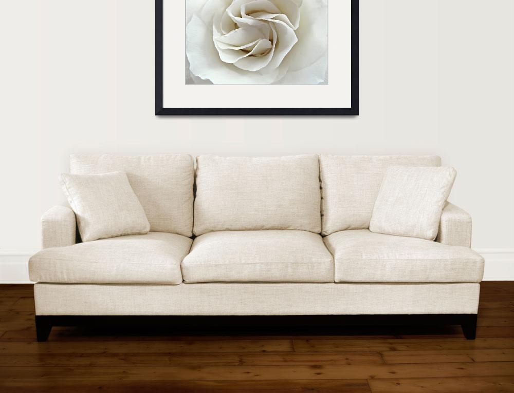 """""""A Rose for Mom&quot  (2012) by SVPhotoArt"""
