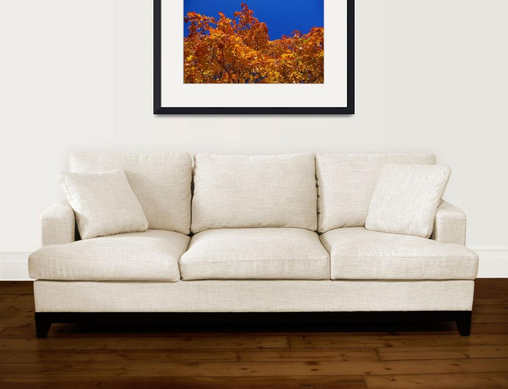 """""""Fall Colours&quot  by ChrisHudson"""
