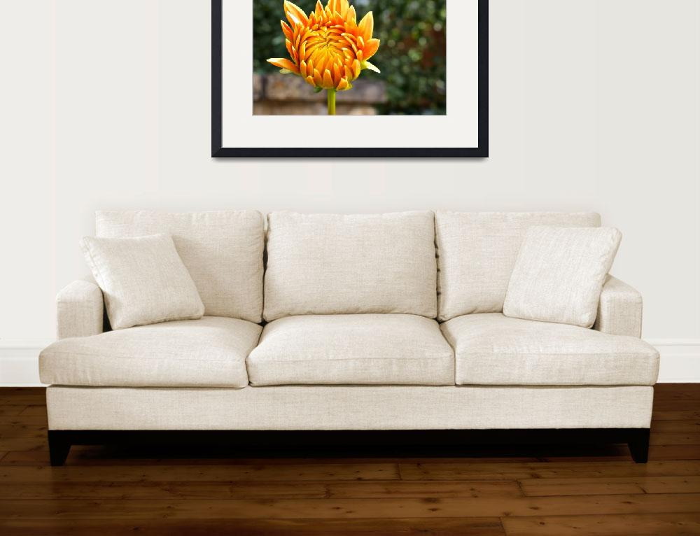 """""""""""Dahlia Blooming Bud""""&quot  (2015) by AlexandraZloto"""