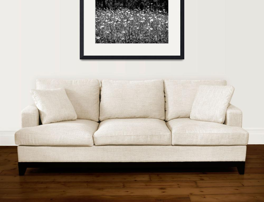 """""""Buttercups in Black and White&quot  (2017) by MotherNature1"""
