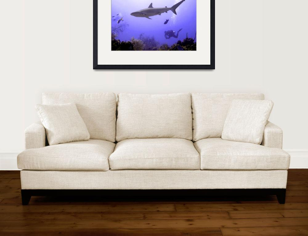 """""""Swimming Shark&quot  by Serena"""