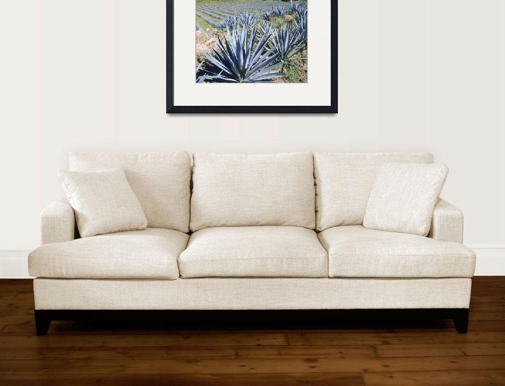 """""""Tequila Agave Cultivation Mexico&quot  by Panoramic_Images"""