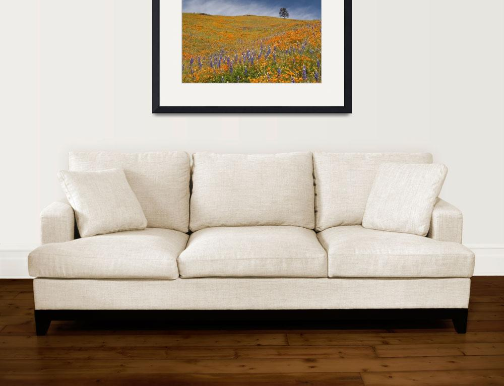 """Poppies on Mount Murphy&quot  (2008) by SederquistPhotography"