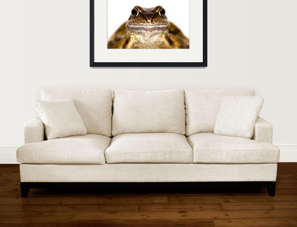 """""""Portrait of the Common Frog""""  (2010) by CelticOriginsPhotography"""