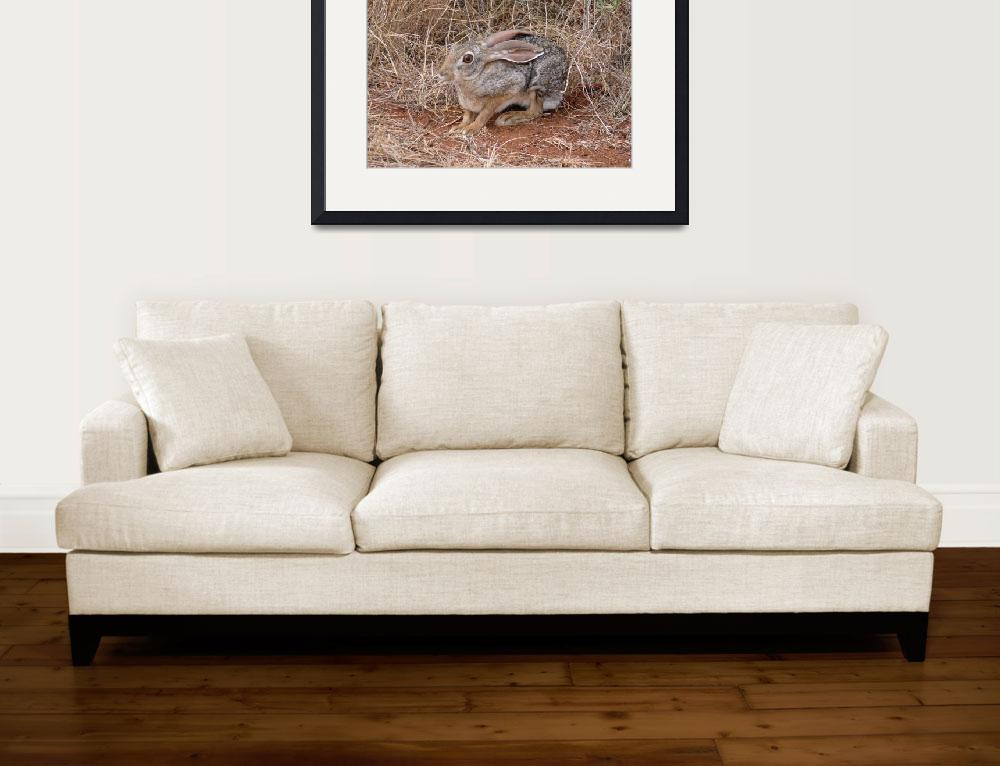 """African Hare""  (2007) by stockphotos"