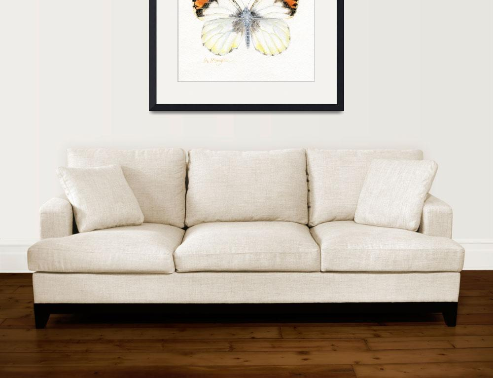 """Sara orangetip butterfly""  (2008) by LisaMclaughlin"