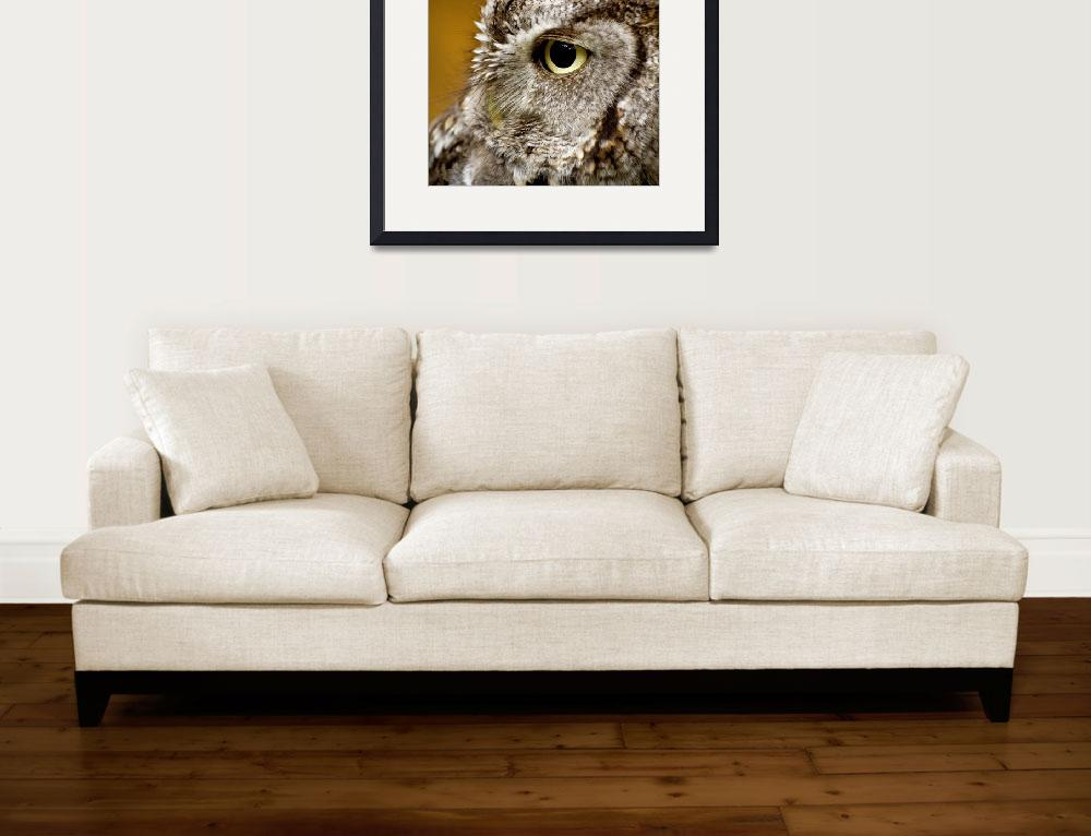 """""""Eastern Screech Owl&quot  (2015) by CampCrazyPhotography"""