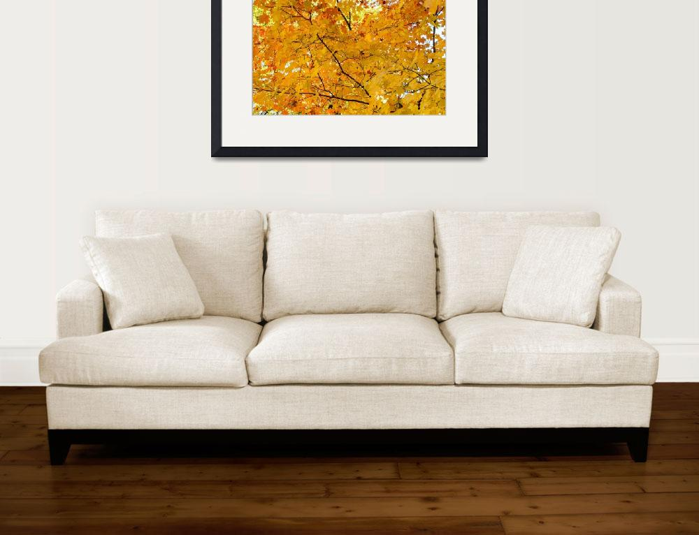 """Maple Tree Autumn Color Bliss""  (2018) by lightningman"