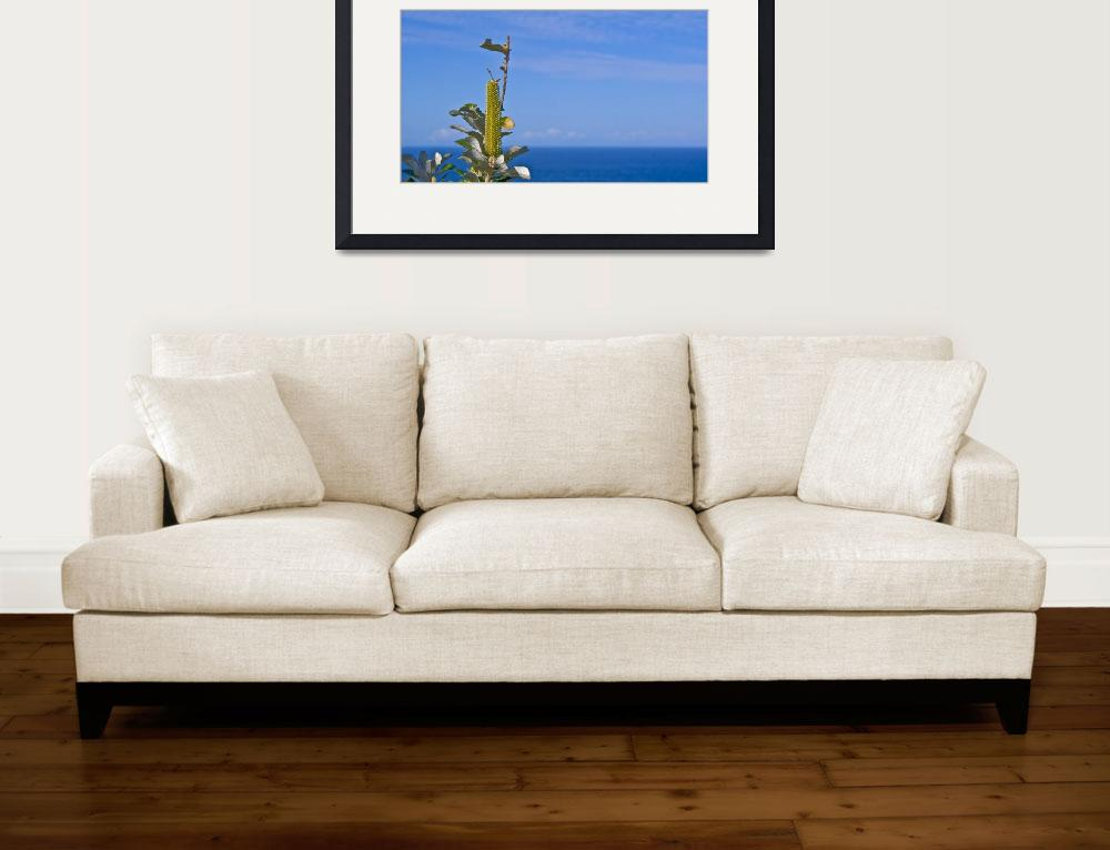 """""""BYRON BAY OCEAN PLANT&quot  by C0LUMBIA"""