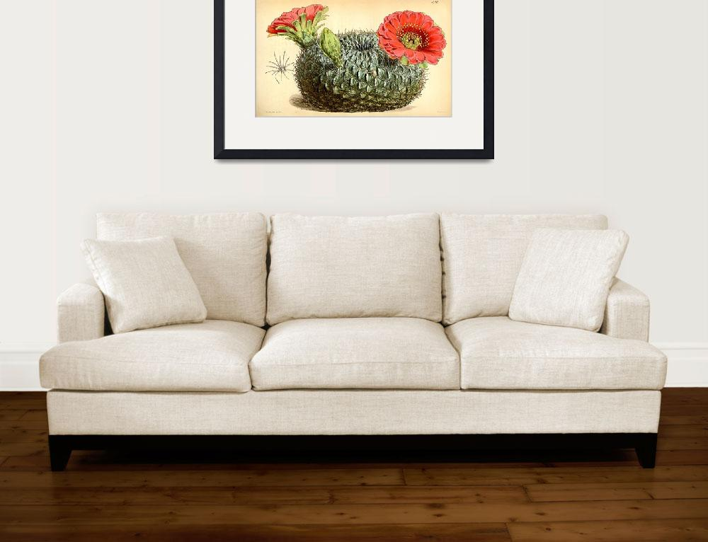 """""""Cactus ~ Flowering&quot  (2018) by madebydebyholland"""