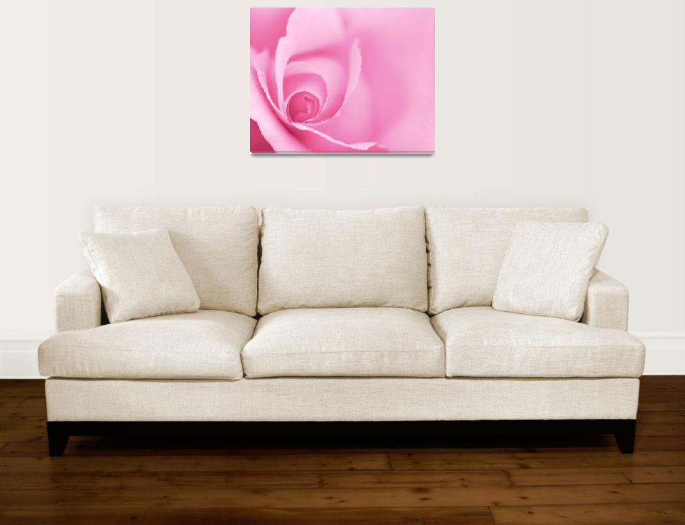 """Pale Pink Rose&quot  (2012) by NatalieKinnear"