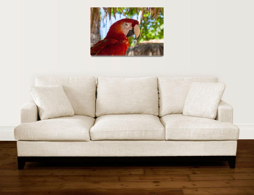 """Scarlet Macaw profile""  (2012) by puravidaviews"