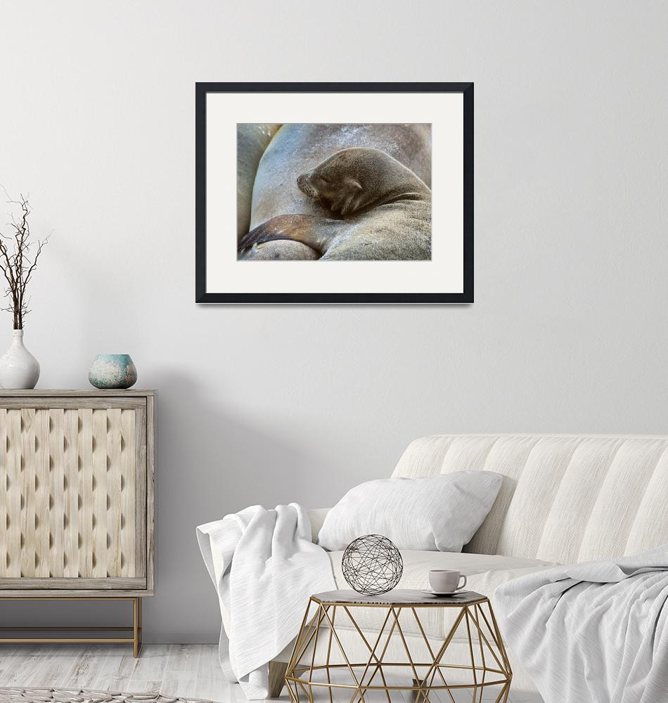 """""""Sleeping Baby Sea Lion""""  by dianesmook"""