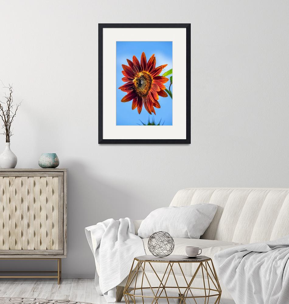 """red sunflower""  (2019) by cisfo"