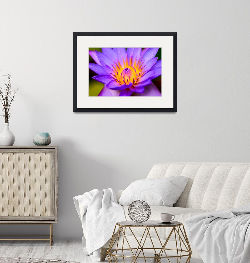 """""""Water lily Maldives Indian Ocean""""  by JohnRees"""
