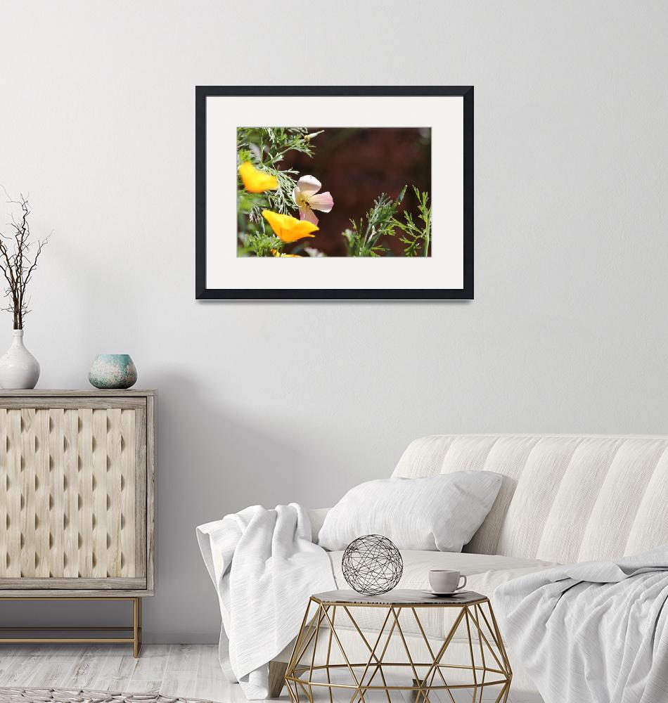 """""""Californian Poppies""""  (2011) by loversdream"""