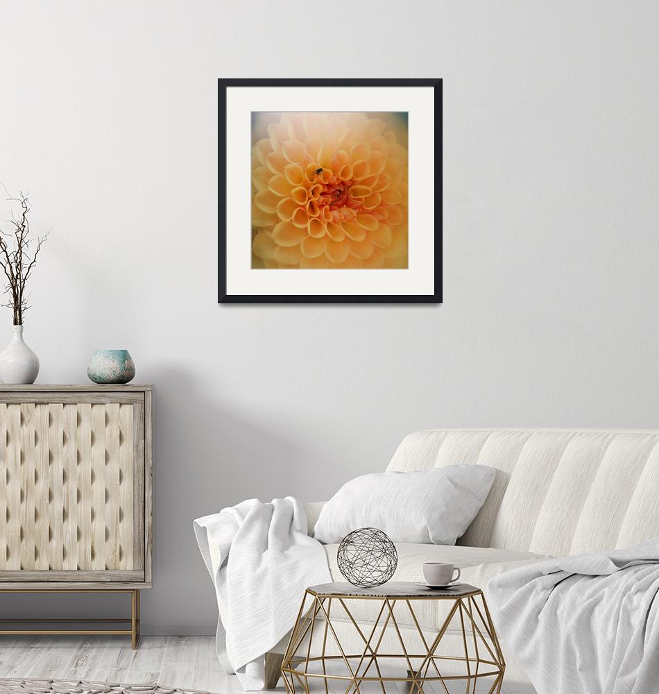 """""""a soft dahlia with a fly""""  by Pinus"""