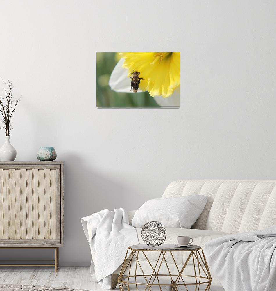 """""""Yellow And White Daffodil""""  by ScottHovind"""