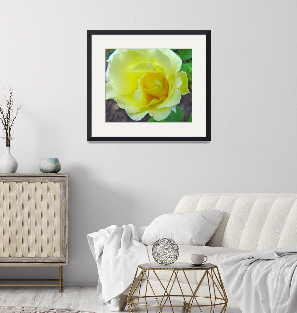 """Yellow Rose Off Center""  (2010) by bleij50"