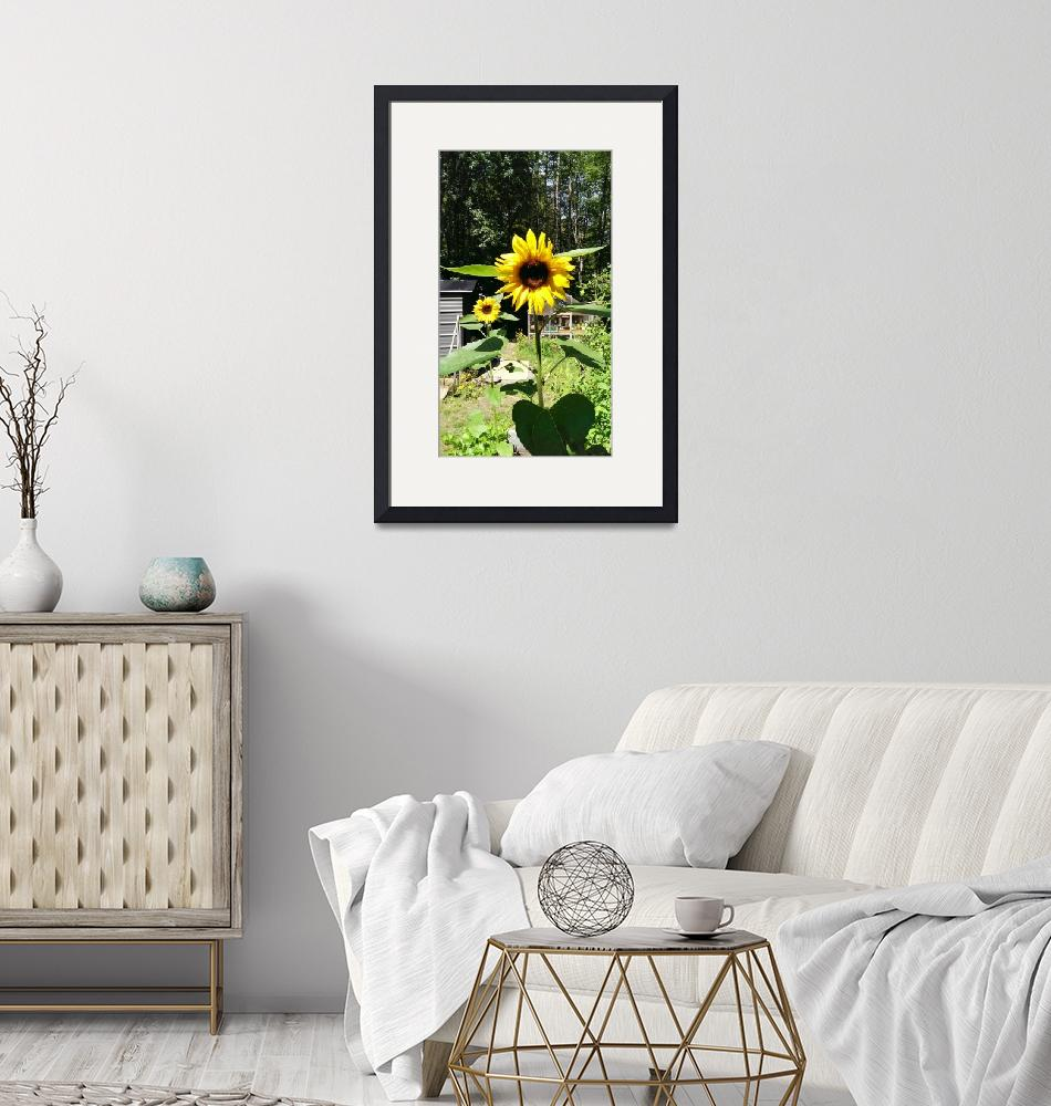 """""""Sunflowers""""  (2013) by JkundProductions"""