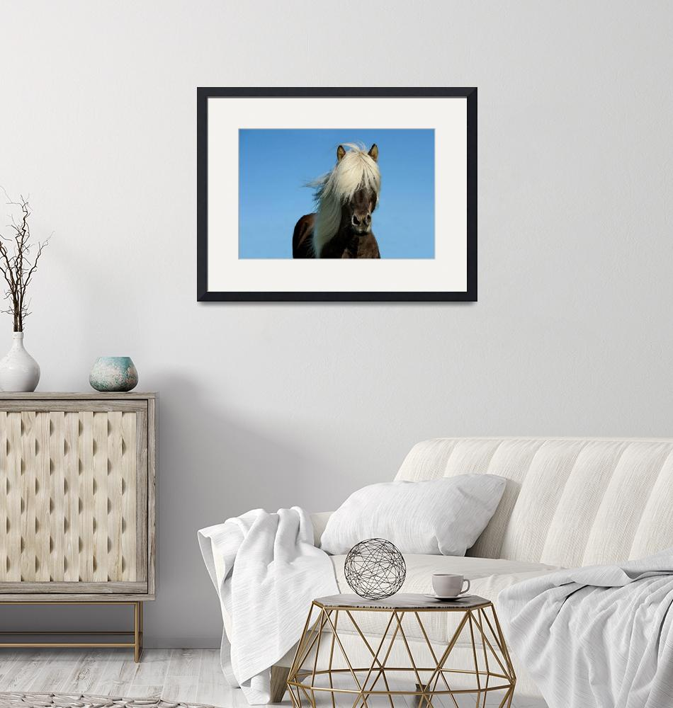 """""""Iceland Pony""""  (2016) by rogueart"""