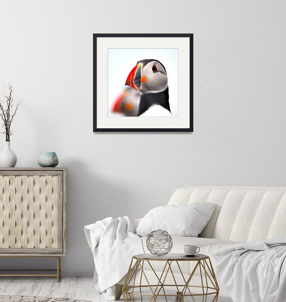 """Puffin Close Up""  (2005) by JoaoPonces"