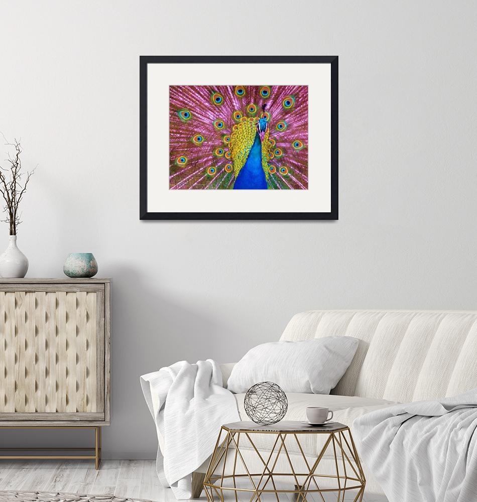 """""""peacock-eyed""""  (2015) by gallerymay"""