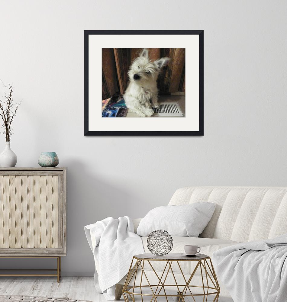 """""""Curious Miss Daisy - West Highland White Terrier""""  by artsandi"""