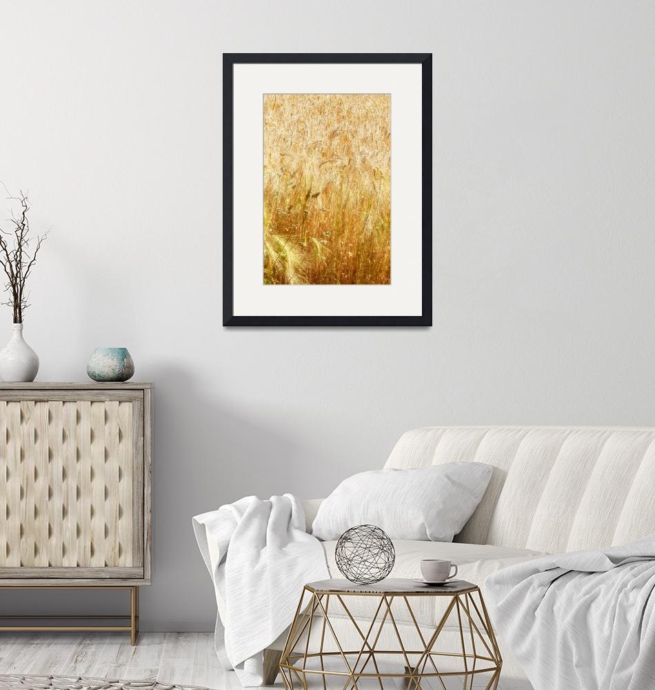 """""""Field of Gold 1""""  (2014) by AnnG"""