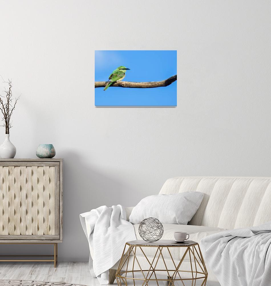 """""""Green bee-eater""""  (2017) by RobbieRoss"""