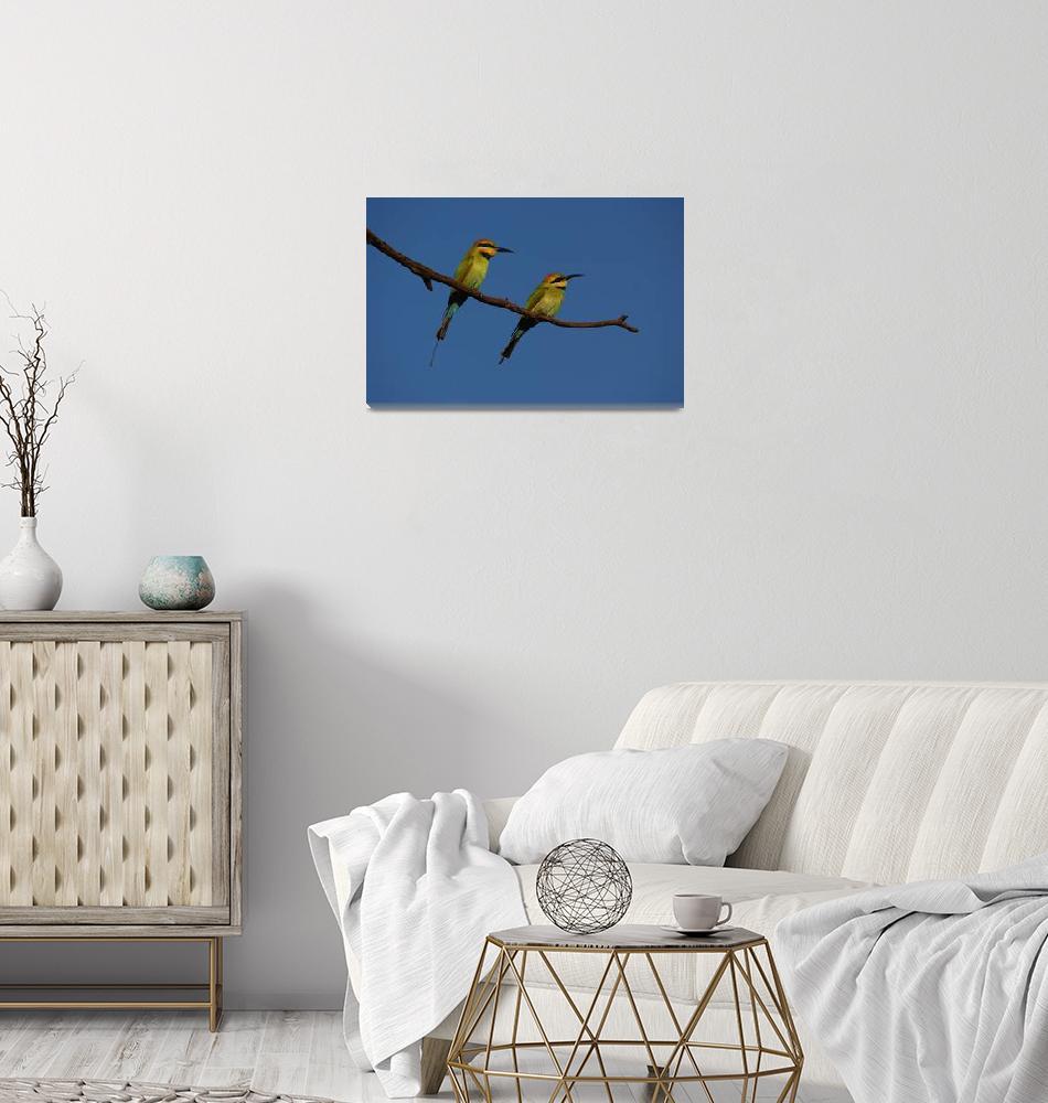 """Rainbow Bee-eaters""  (2013) by Melva"