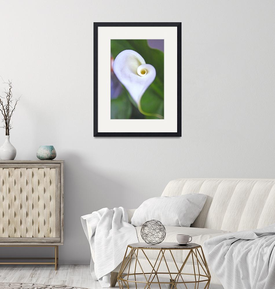 """""""Calla Lilly""""  by LindaYvonne"""