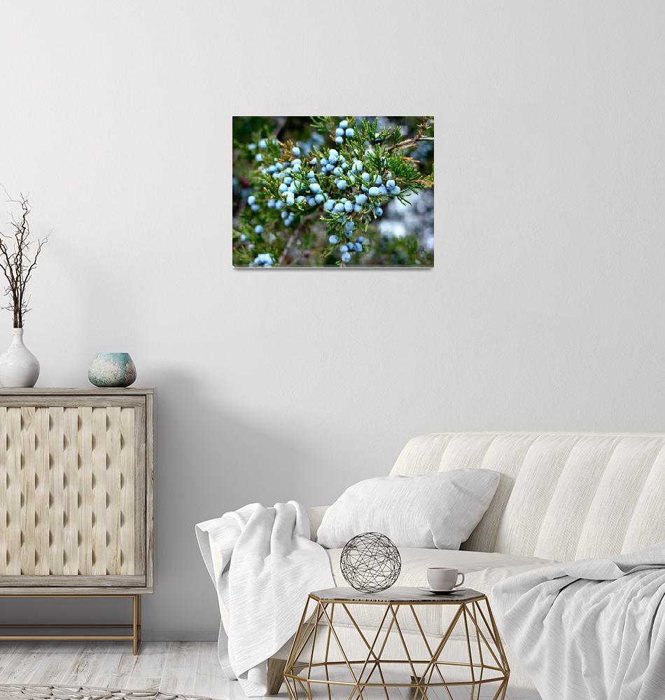 """""""Cedar berries""""  by ArtSmith"""