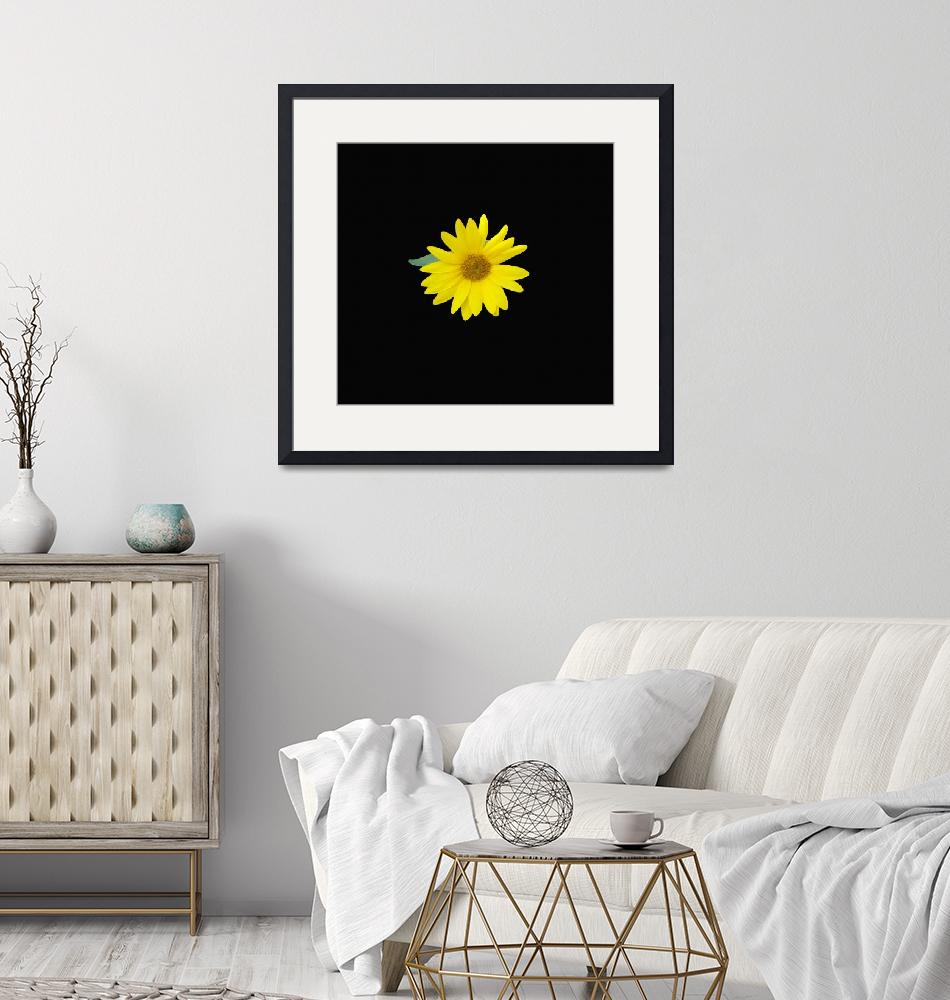 """yellow sunflower centered on a dramatic black back""  (2018) by NormaStampSunnyDaze"