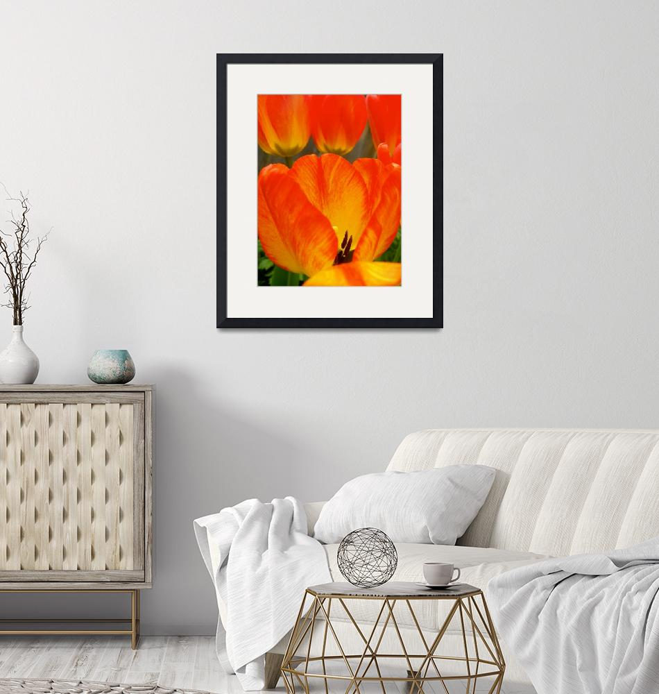 """""""Colorful Spring Tulip"""" (2015) by vpicks"""