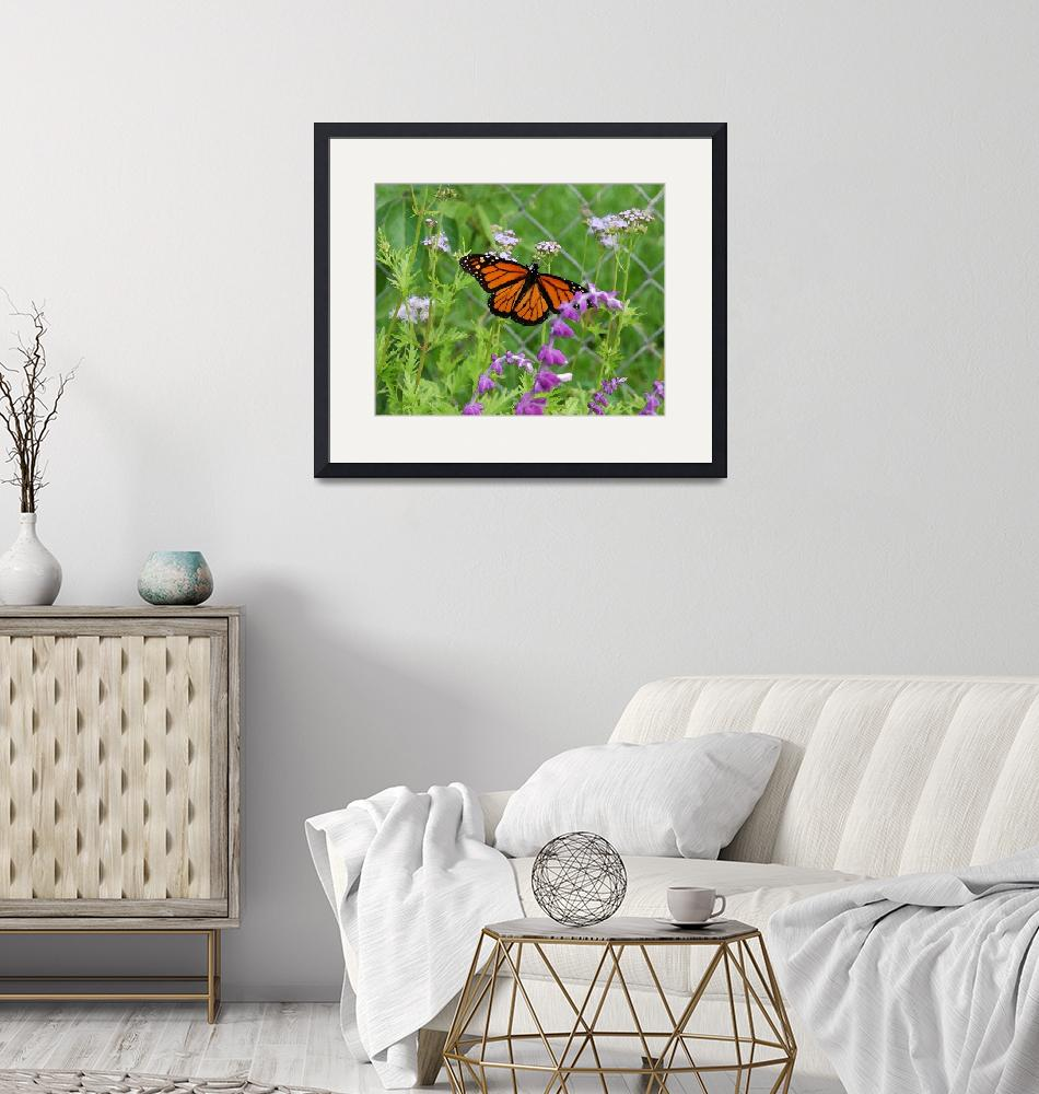 """""""Monarch Butterfly-8x10""""  by LindaWolff"""