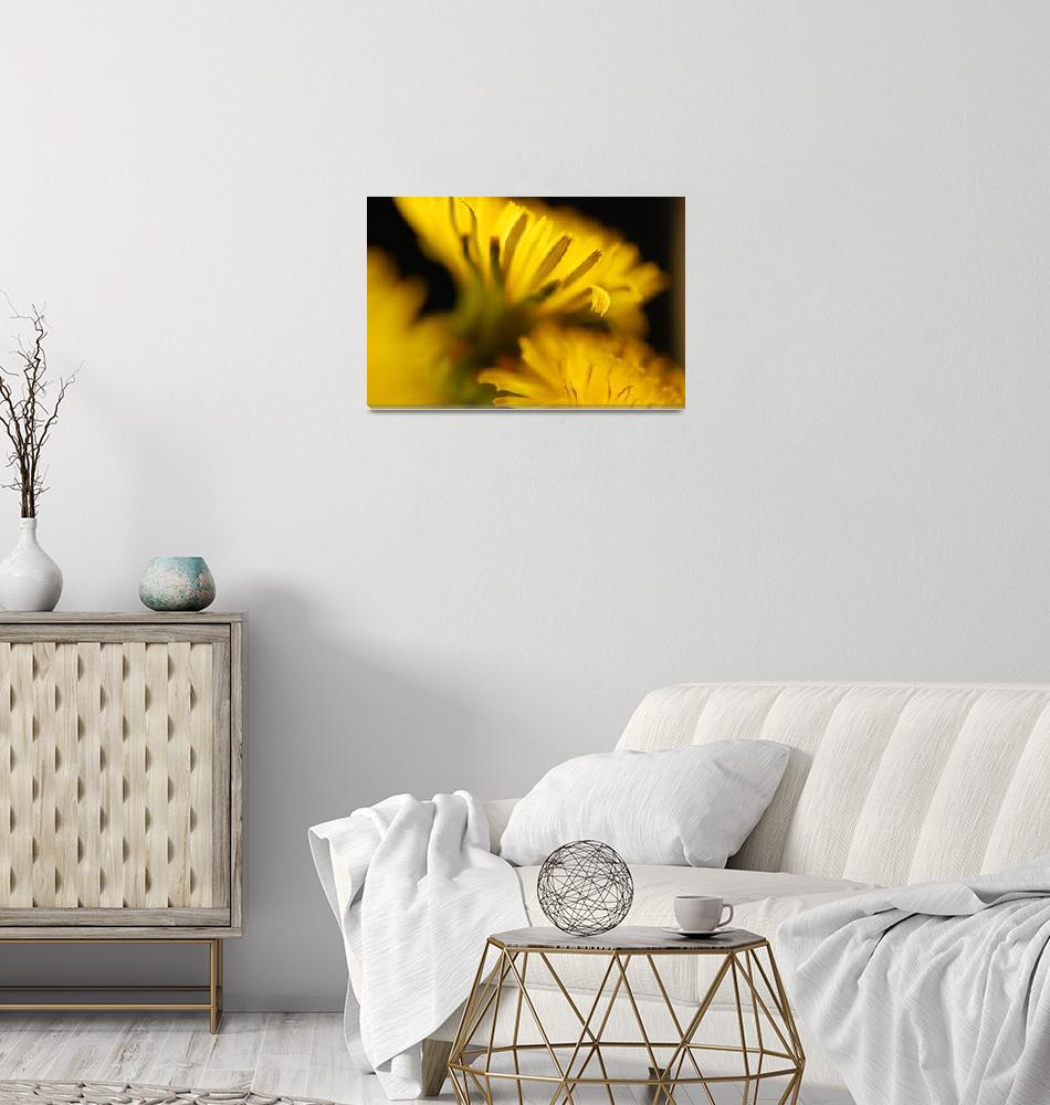 """Dandelion""  (2008) by Rad"