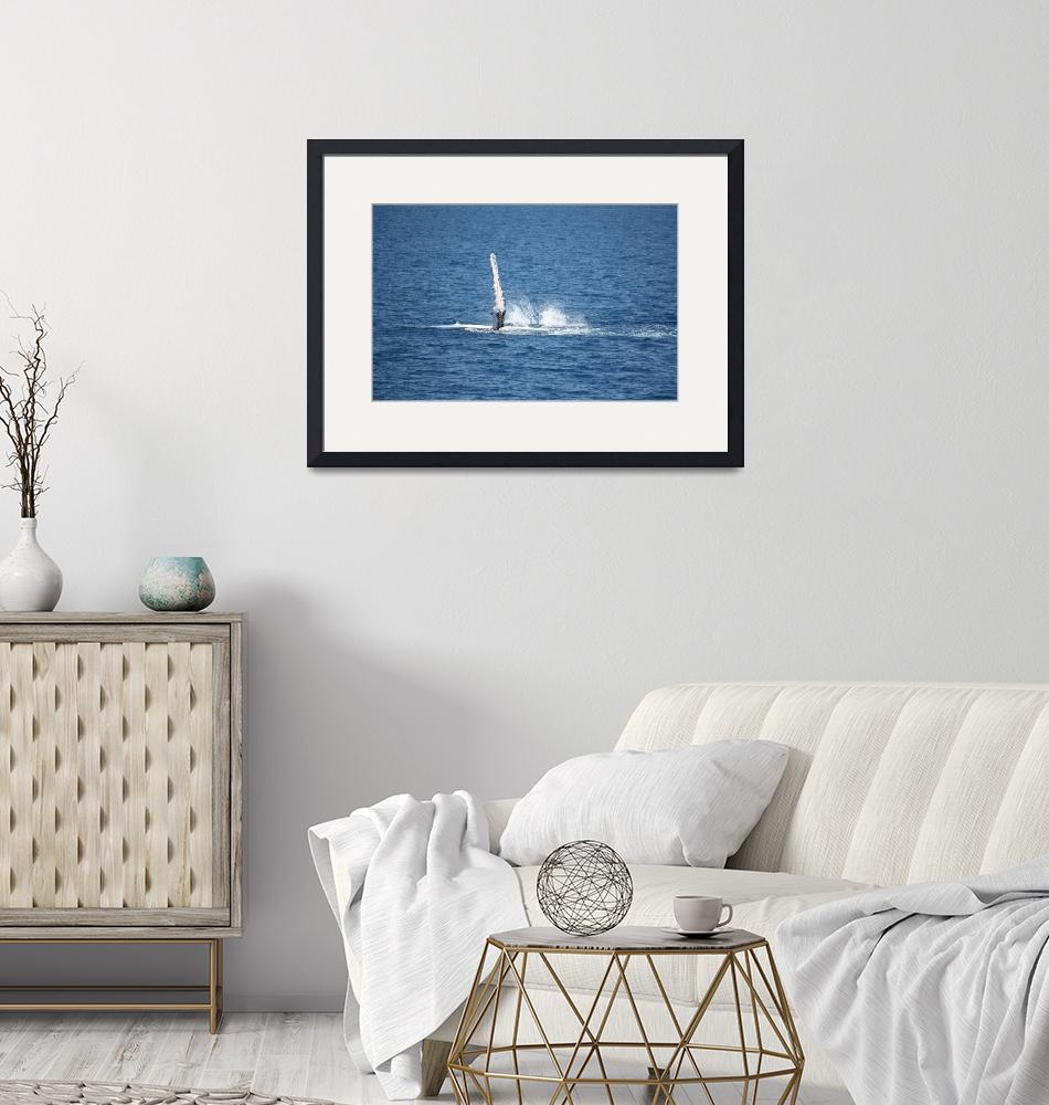 """""""NaP_ Whale Watching198a""""  by nevilleprosser"""